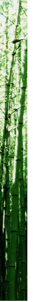 Bamboo_border
