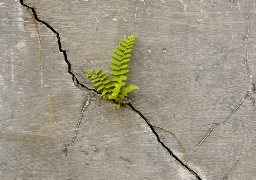Er-blog-plant-cracks-concrete