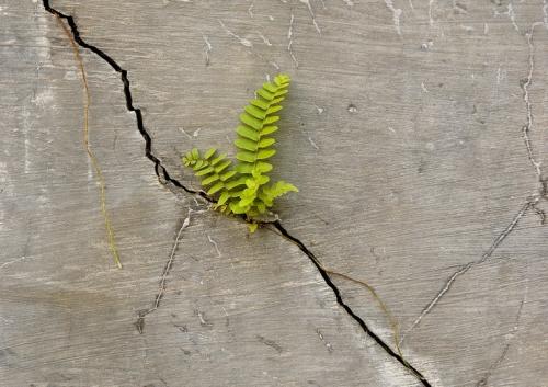 Er-blog-plant-cracks-concrete