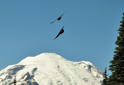 Er-blog-two-ravens-better-than-one