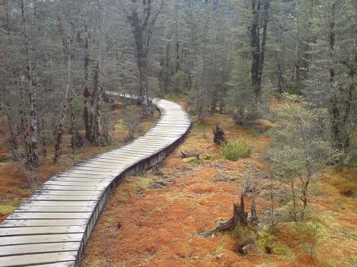 Er-blog-boardwalk-1