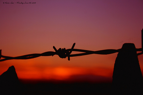Er-blog-barbed-wire