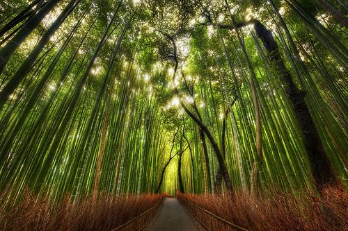 Er-blog-customs-bamboo