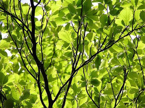 Iad-leaves