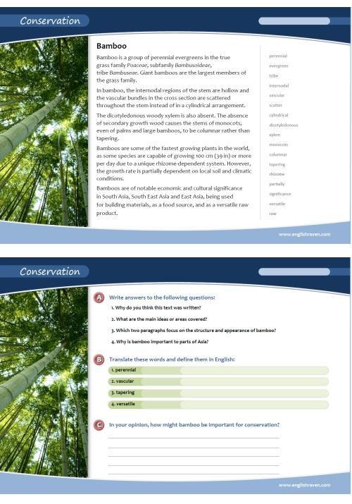 Er-blog-bambootemp-a