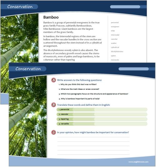 Er-blog-tmd-bamboo