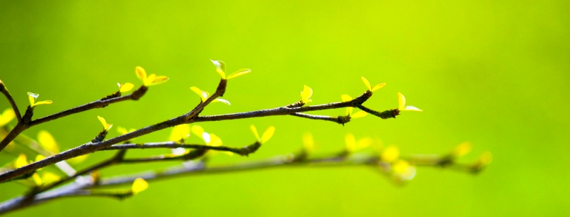 Branch-growth-new